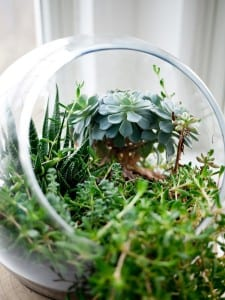Green botanicals in a terrarium