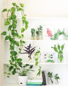Create a green oasis indoors with house plants