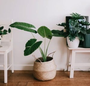 Bringing the outside in with greenery in your home study