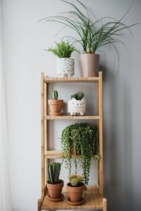 Ladder decorated with house plants