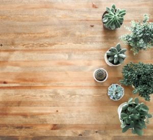 Add real house plants to your office environment