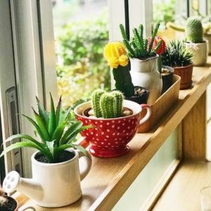 Home makeover - flowers on window sill