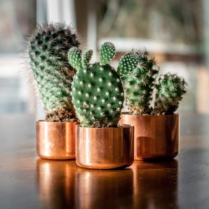 Adding greenery to your home - succulents in copper pots